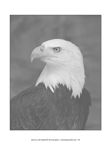 America the Beautiful Activity Book Pic 05
