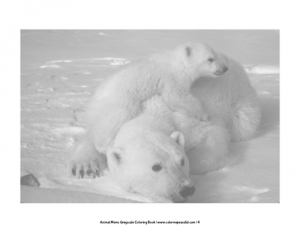 Animal Moms Grayscale Coloring Book Pic 02