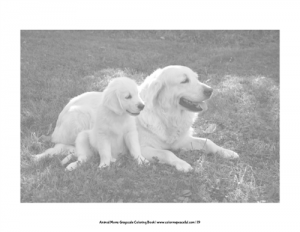 Animal Moms Grayscale Coloring Book Pic 04