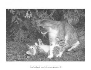 Animal Moms Grayscale Coloring Book Pic 08