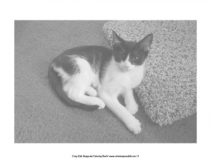 Cozy Cats Grayscale Coloring Book Pic 04
